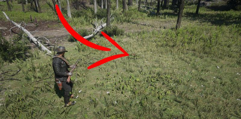 Испытание травник 2 в Red Dead Redemption 2 - Где найти 4 вида ягод?