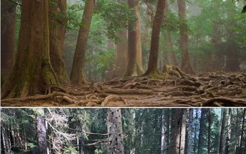 Главный по STALKER 2 опубликовал фотографии леса, и задал вопрос аудитории